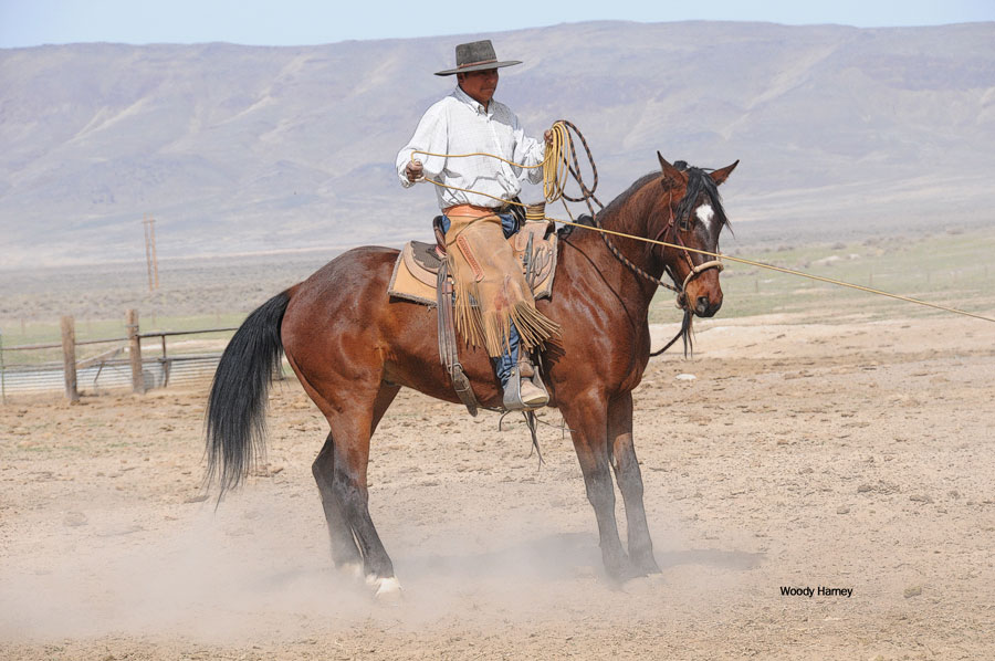 Welcome to my new page that features photos and the stories of individual Great  Basin Buckaroos! c21bc51e1fe